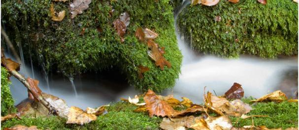 Fotografía de Cangas de Narcea: Parque Natural Monte de Muniellos