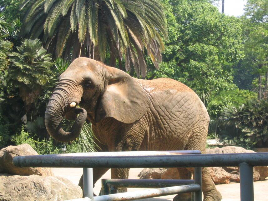 oferta hotel zoo barcelona