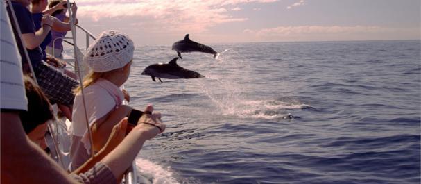 Fotografía de Adeje: Encuentros con cetáceos