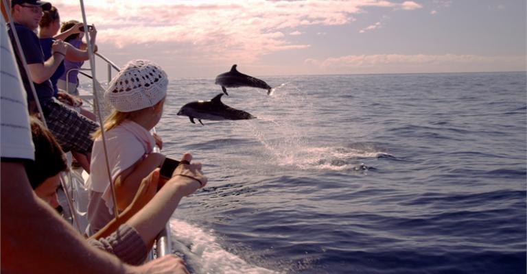 Fotografia de Adeje: Encuentros con cetáceos