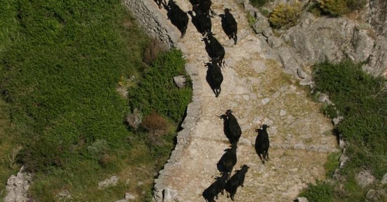 Fotografía de Cuevas del Valle: Transhumancia, en la calzada