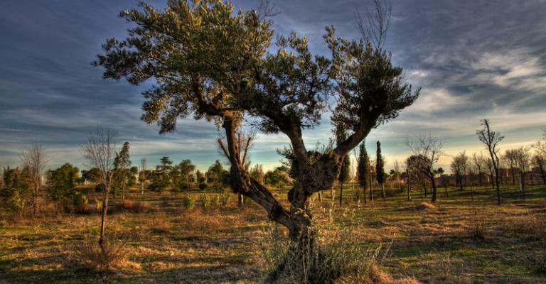 Fotografia de Manzanares el Real: Parque Manzanares
