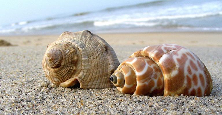 Fotografía de : Sant Pol de Mar