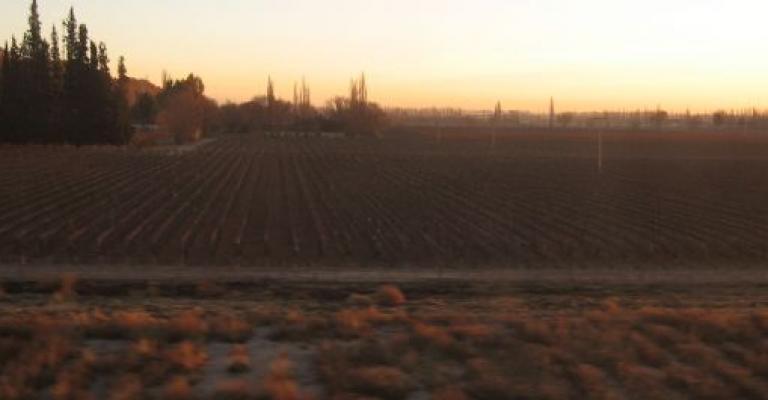 Fotografía de Mendoza: Viñedos en Mendoza